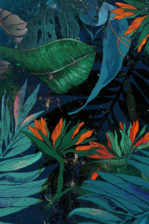 Grafika Jungle 2